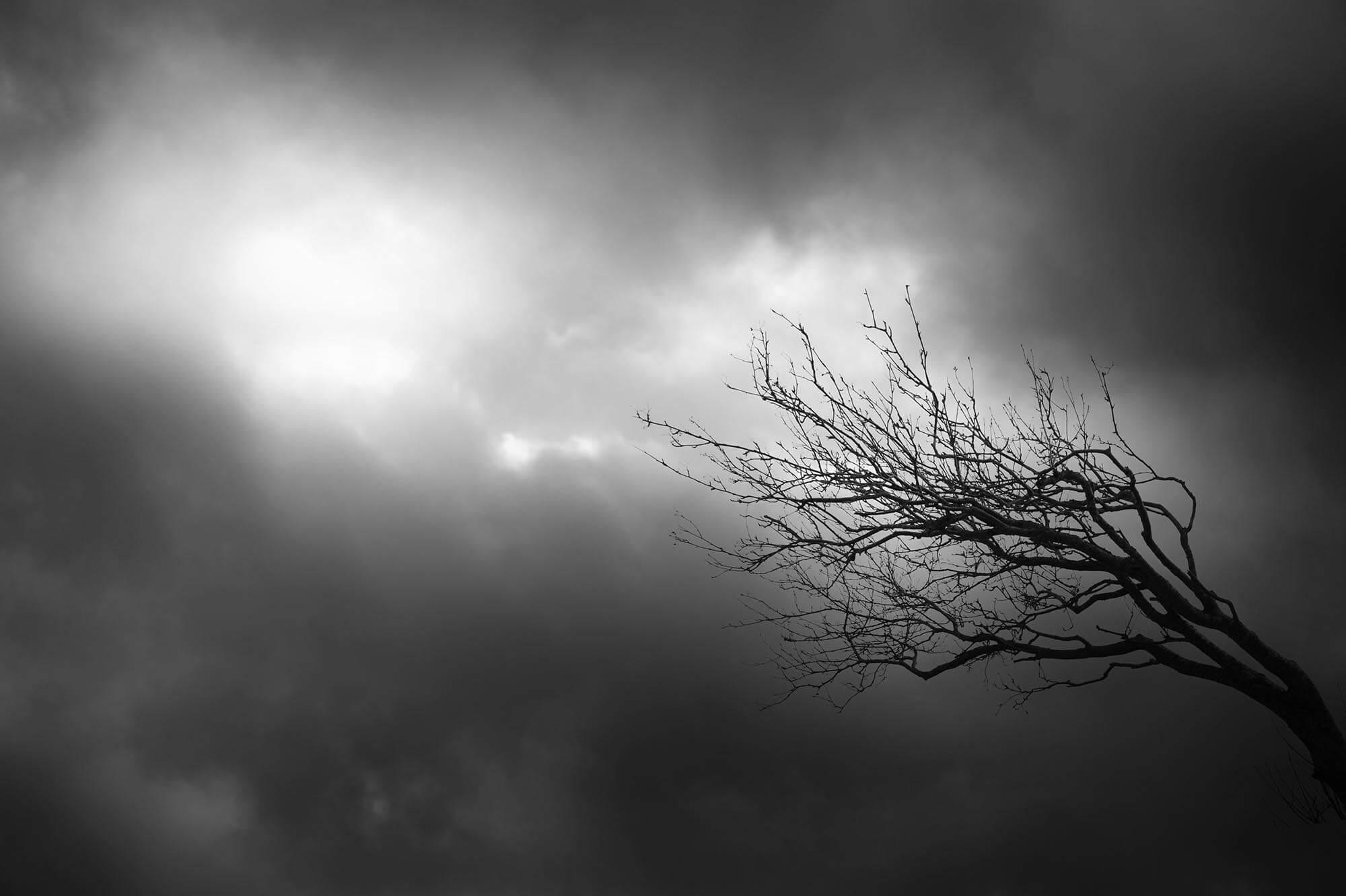 Grener mot åpen himmel